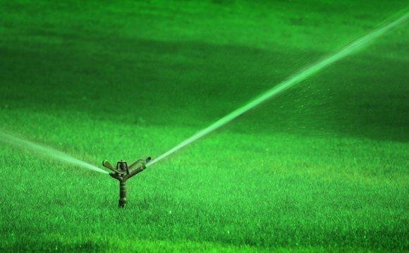 Как правильно сделать газон на участке