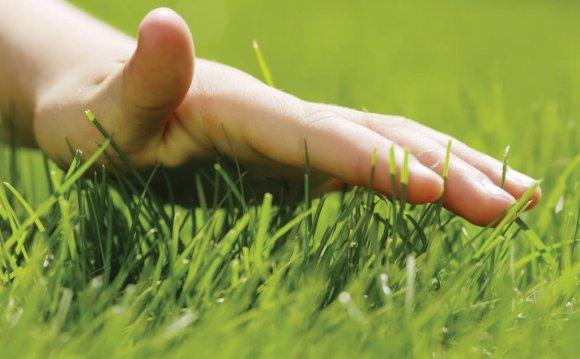 Почему желтеет газонная трава и как с этим бороться