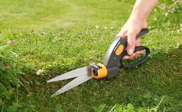 Стрижка газона: как правильно постричь перед зимой: фото