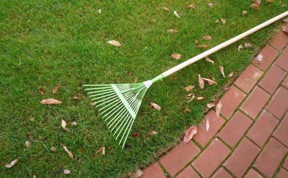 Стрижка газона поможет создать на участке ровный, густой зеленый ковер