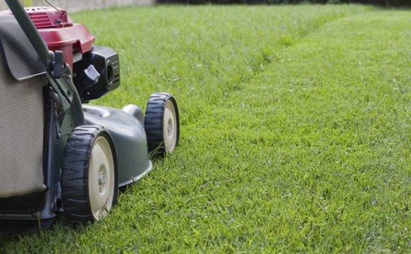 Уход за рулонным газоном после укладки - полив, стрижка, подкормка